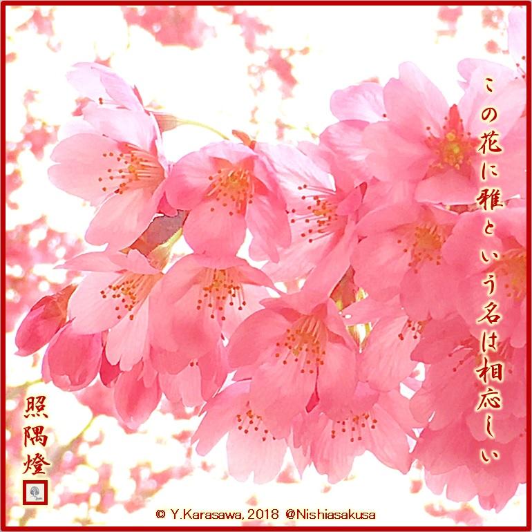 180323桜‐雅LRG