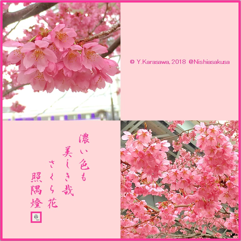 180326桜‐雅LRG
