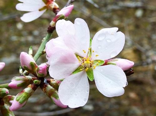 flower_star.jpg