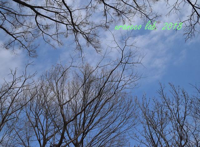2月27日早春の空2