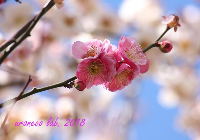 3月5日思いのまま5
