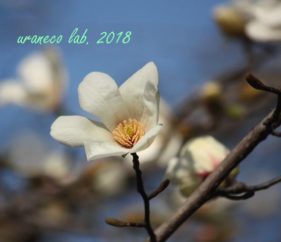 3月19日辛夷3