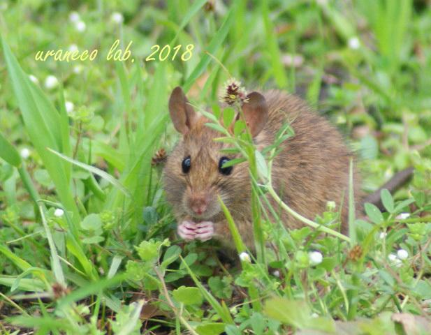 3月19日ネズミ3