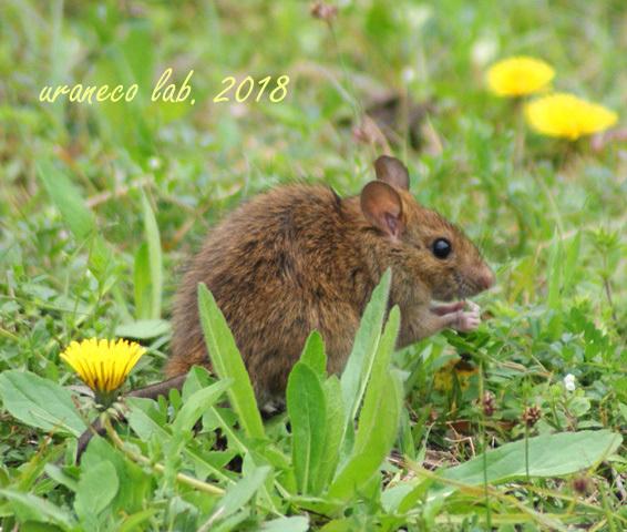 3月19日ネズミ2