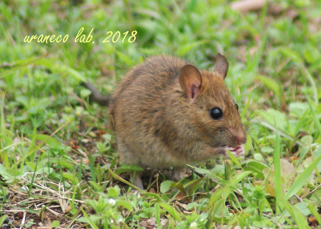 3月19日ネズミ