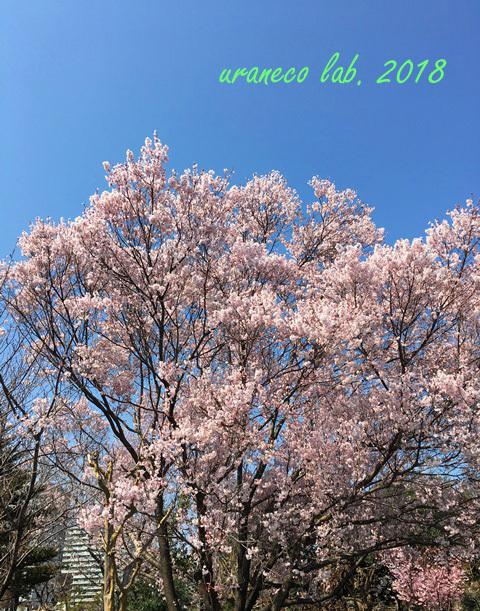 3月26日江戸彼岸