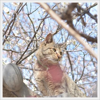 神社と猫.jpg
