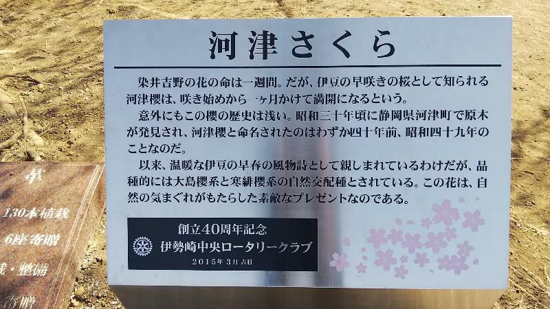 河津桜説明文20180304