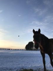 20180129 馬と鳥(カラス^^;)レイクヴィラファームの風景^^)