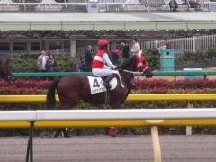 20121111ショウナンアポロン4