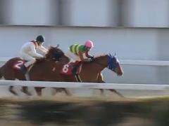 20180309 笠松12R 弥生特別 A2 ハッピーサンディー 04