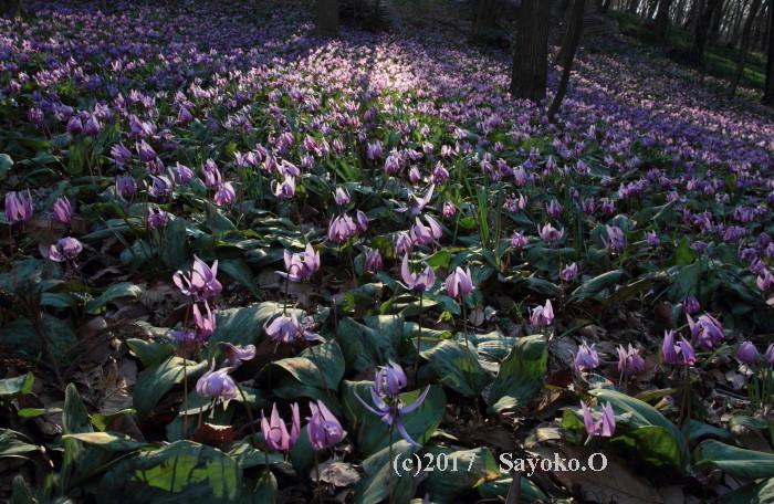 ①春へのいざない_MG_4089