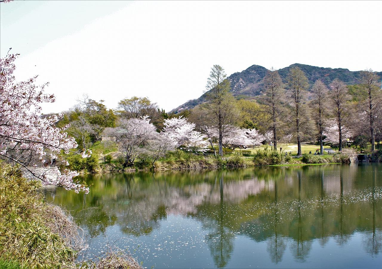 奥須磨公園 桜②