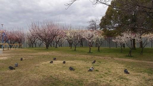 城北公園3