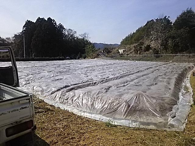 土壌消毒処理