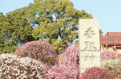 梅の花園香取神社