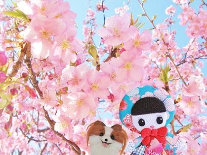 またね 江戸川河津桜
