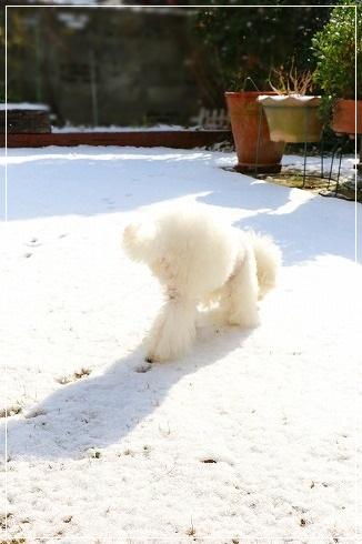 雪が積もった日曜日