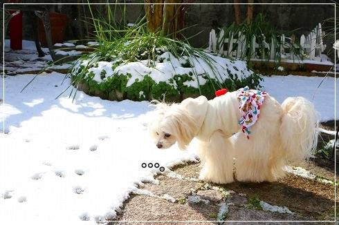 と、雪に凹むすももん