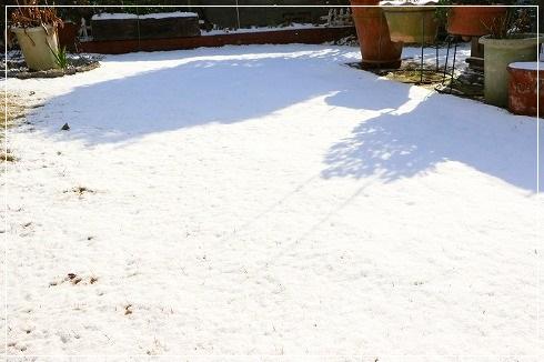 朝起きたら、雪が積もっておりました(2月4日)