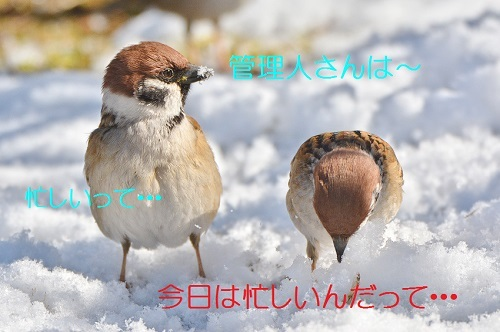 030_2018021721523201e.jpg