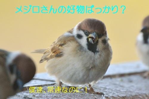 040_20180203213825f15.jpg