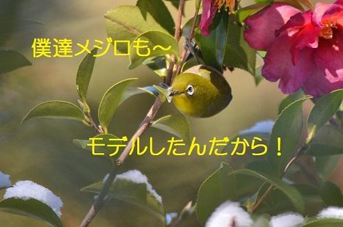 040_201802151824048fb.jpg