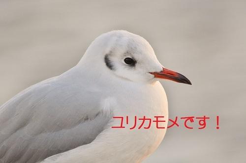 050_2018022819185653f.jpg