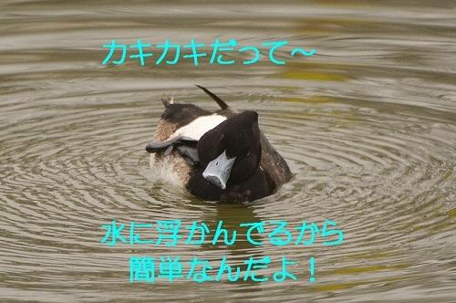 060_20180311204240df1.jpg