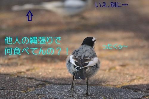 080_20180216205151f2b.jpg