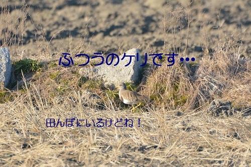 090_20180131181937d31.jpg