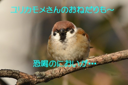 090_20180228191933bbc.jpg