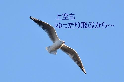 130_20180228192459d10.jpg