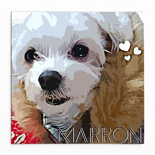 wn_marron_front4cブログ
