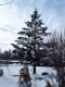 今朝の雪景色①
