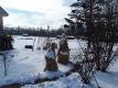 今朝の雪景色②