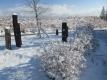 シモツケの雪