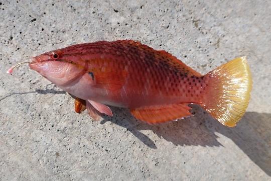 hachijojima fishing 08