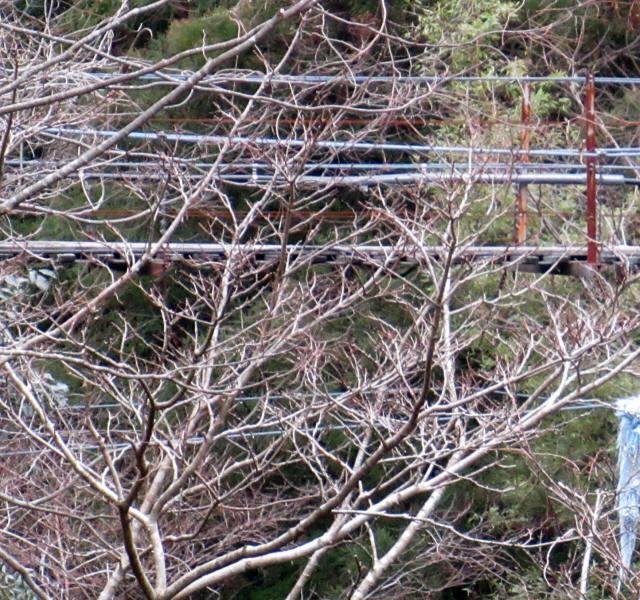 上小藪川の吊橋1-0