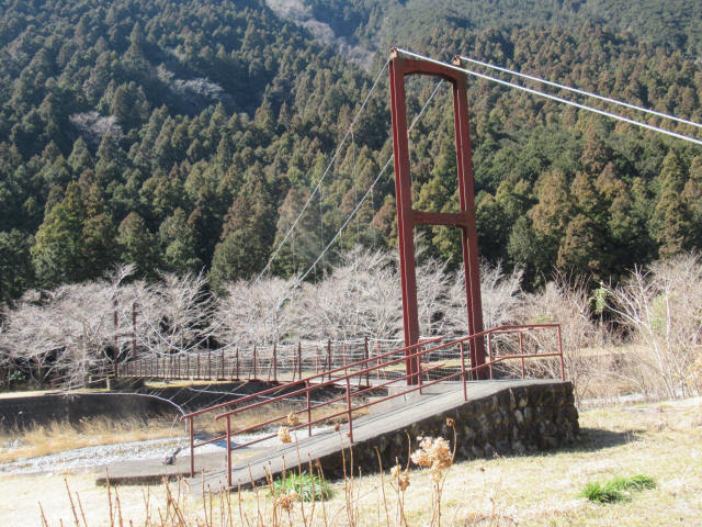 佐野川キャンプ場の吊橋3