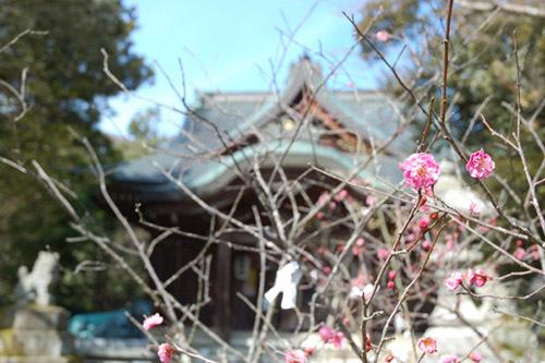城下町 大聖寺の春の訪れ