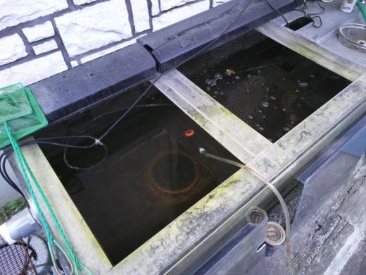 大水槽 (2)