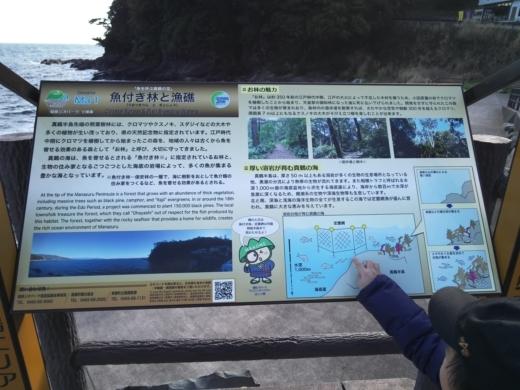 真鶴琴ヶ浜 (39)