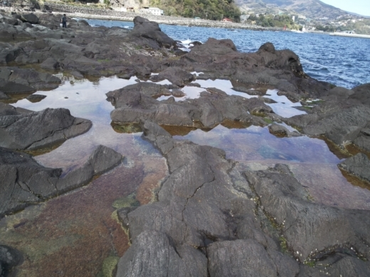 真鶴琴ヶ浜 (51)