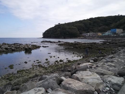 真鶴琴ヶ浜 (65)