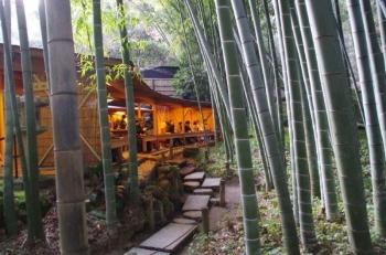 報告寺竹の庭2