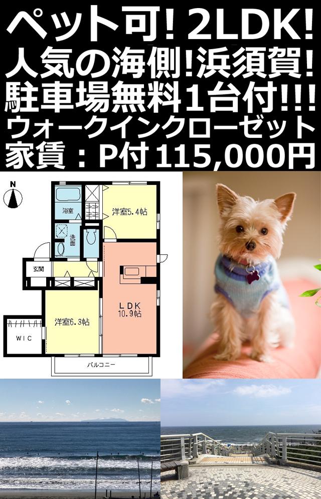 ■物件番号P5301 海近!浜須賀!ペットOK!築浅2LDK+WIC!2階カド!物置付!P無料!11.5万円!