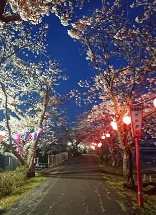 都田川桜並木 その2