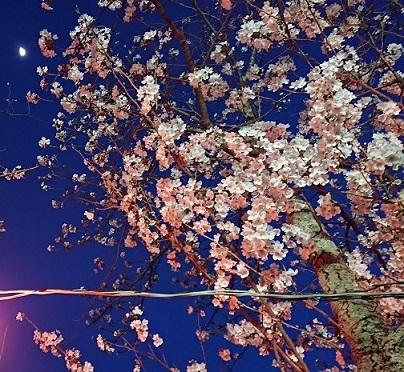 都田川桜並木 その3
