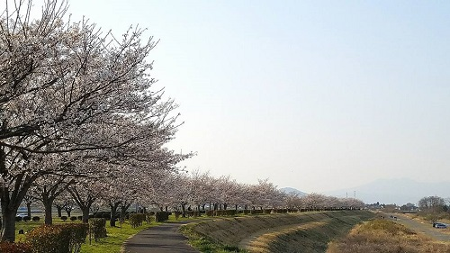 白沢<桜堤>!①